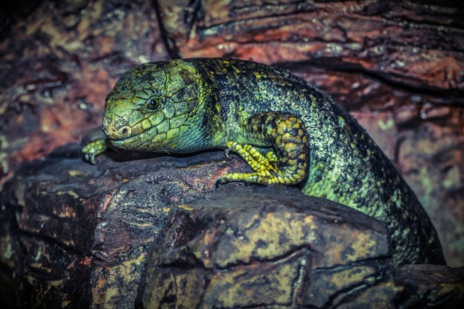 lizard-224857_1280